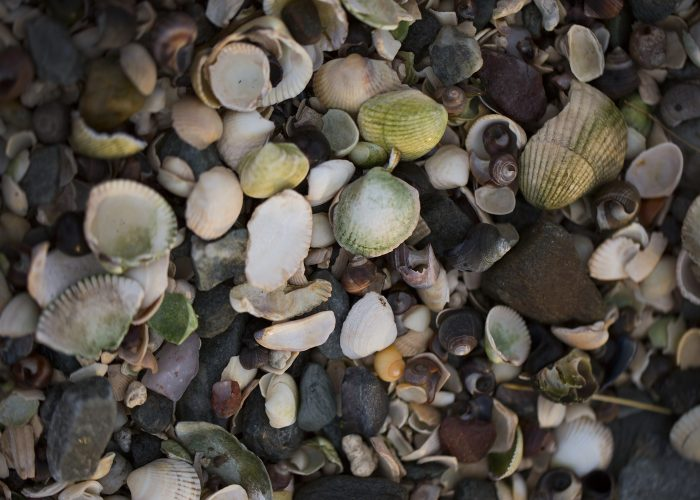 2016-collection-of-shells